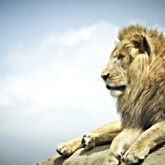 Pride (Genesis 3)